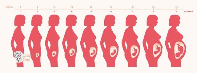 مراحل الحمل الثلاث عند المرأة