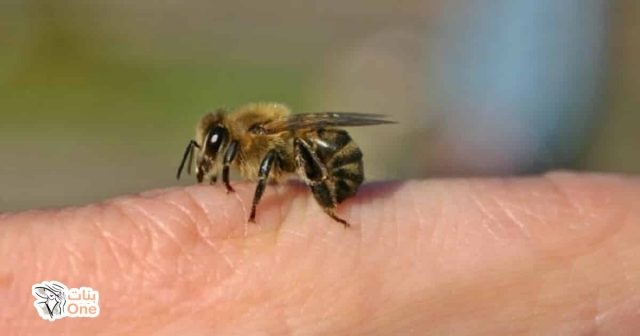 فوائد قرص النحل في علاج الأمراض