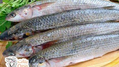 فوائد سمك البوري المذهلة