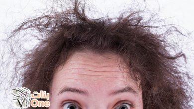 أفضل حل لتقصف الشعر
