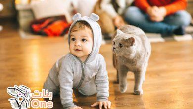 أضرار القطط على الأطفال
