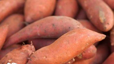 طريقة شوي البطاطا الحلوة