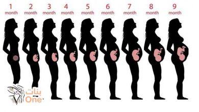 جدول أسابيع الحمل بالأشهر