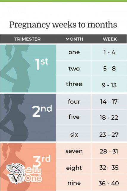 طريقة حساب الحمل وتحويله من أسابيع إلى شهور