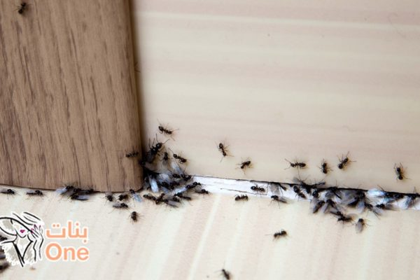 طرق التخلص من النمل في البيت