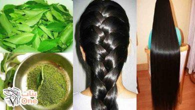 أفضل أعشاب لتطويل الشعر بسرعة